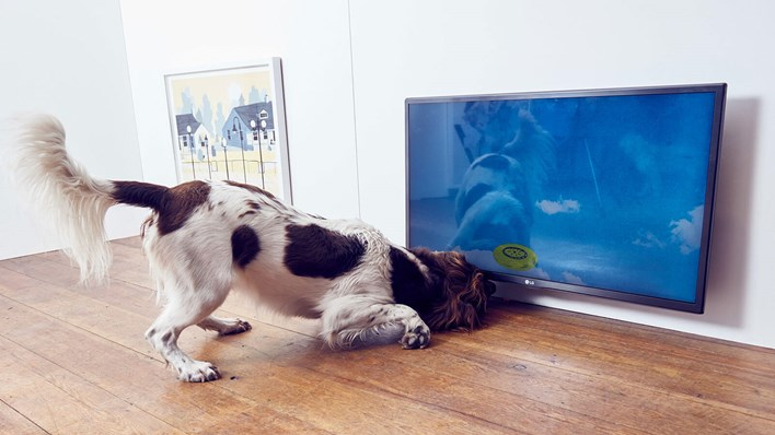 A spaniel enthusiastically inspects an artwork at MORE TH>N's Play More interactive art exhibition for dogs. Copyright MORE THAN