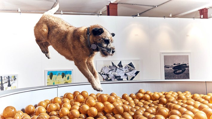 A small dog captured in mid-air as it dives straight into the giant dog food bowl exhibit at MORE TH>N's Play More interactive art exhibition for dogs. Copyright MORE THAN